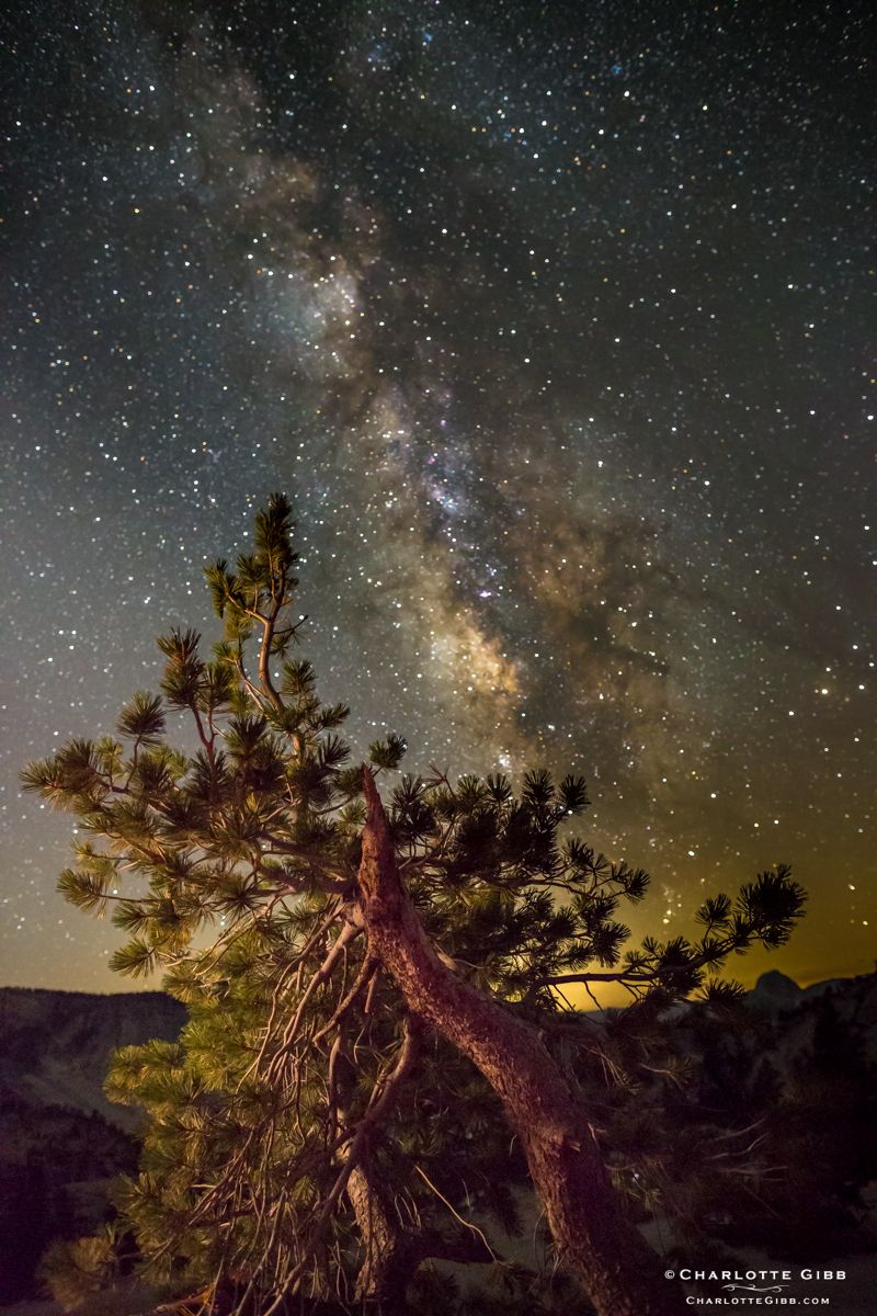Limber Pine and Milky Way