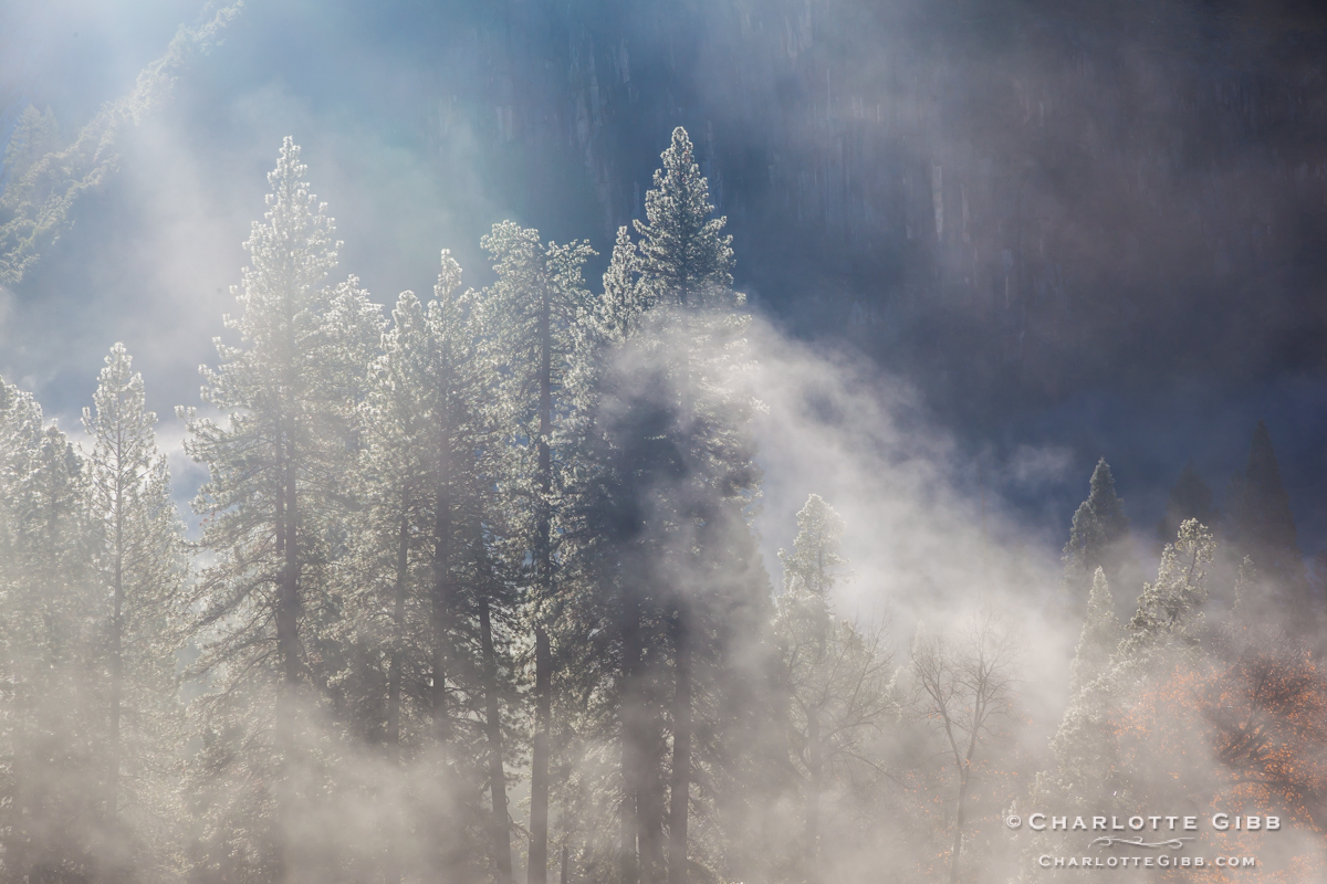 Trees in the Mist, Yosemite, February 2014