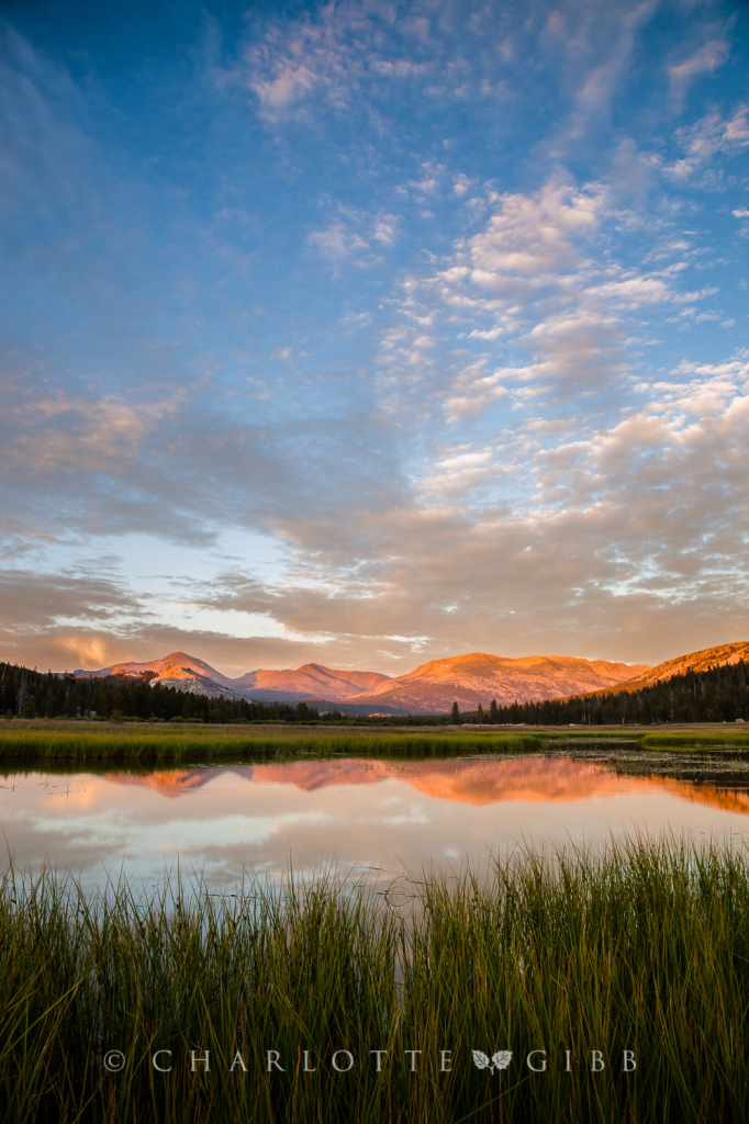 Tuolumne Meadows, Last Light, July 2014
