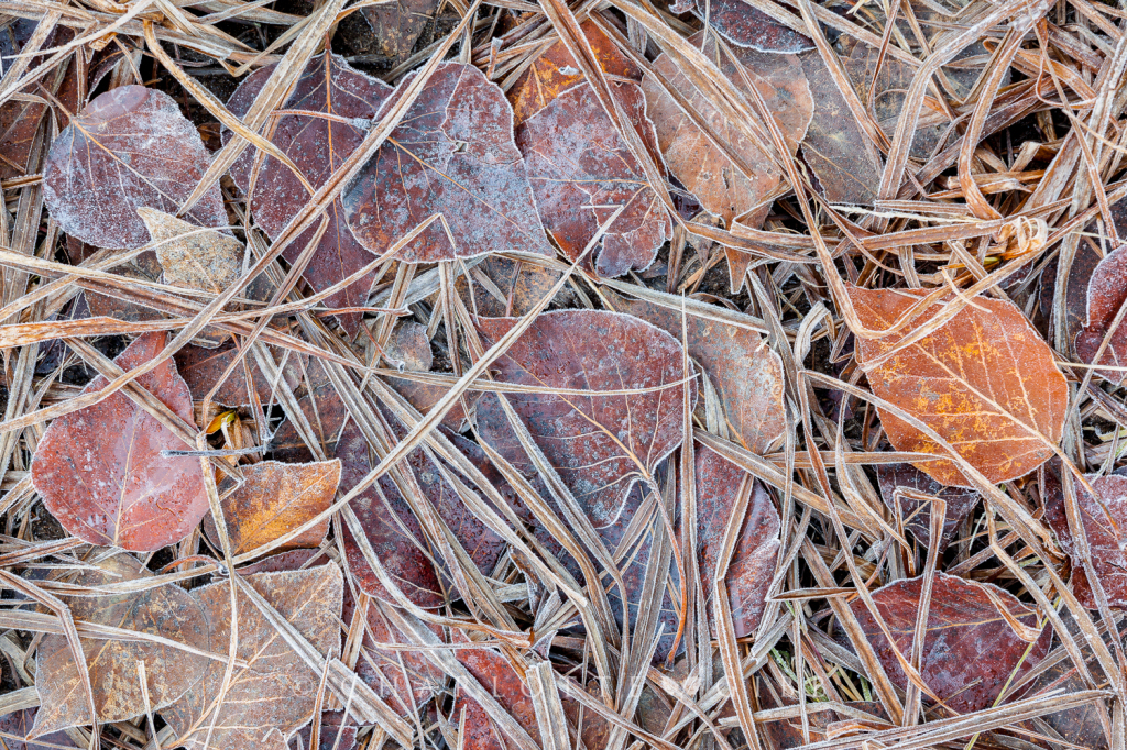 Winter-Pressed Leaves and Grass, February 2014