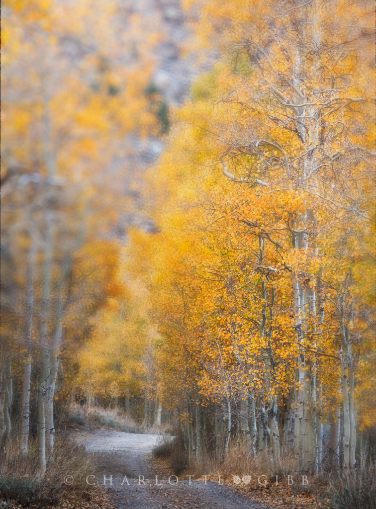 Country Road, Eastern Sierra, October 2014