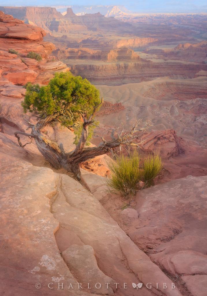 Desert-Dreams