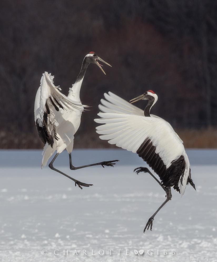 Japan: Part Three — Japanese Cranes - Charlotte Gibb ... - photo#26